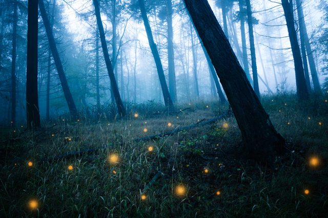 07-fireflies-Things Everyone Should Do at Least Once Before Summer's Over_506851651-ohenze
