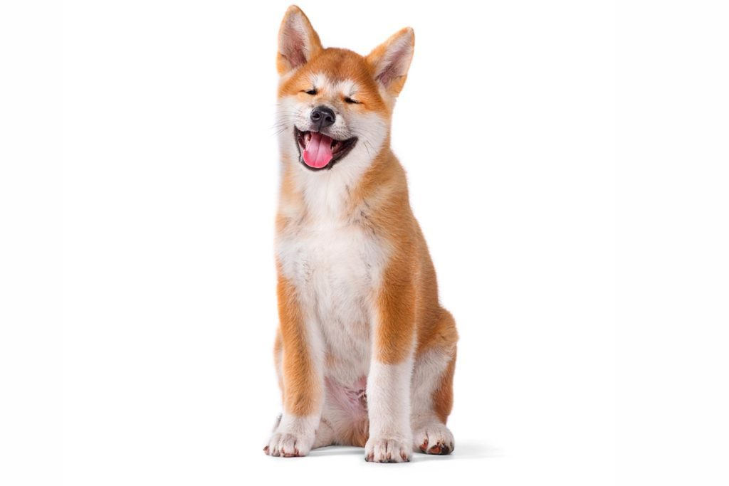 Can Dog Ears Rotate