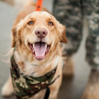 Flight Attendant Makes It Her Mission to Reunite Service Dogs with the Soldiers Who Love Them