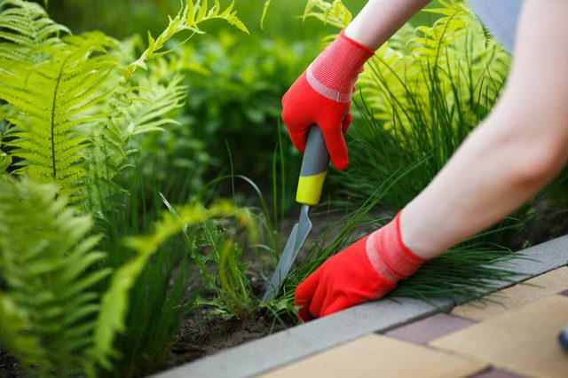21-weeds-Things Everyone Should Do at Least Once Before Summer's Over_634920179-Kostenko-Maxim