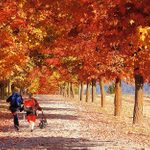 21 Fun Photos That Prove Fall Is Every Child's Favorite Season