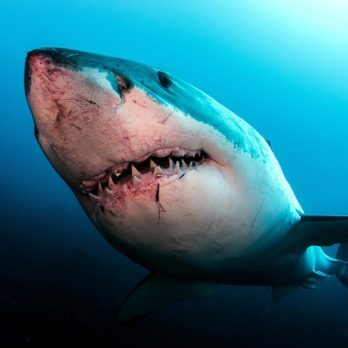 This Is the One Move You Need to Know to Survive a Shark Attack