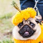 Don't Dress Up Your Dog for Halloween Before Reading This