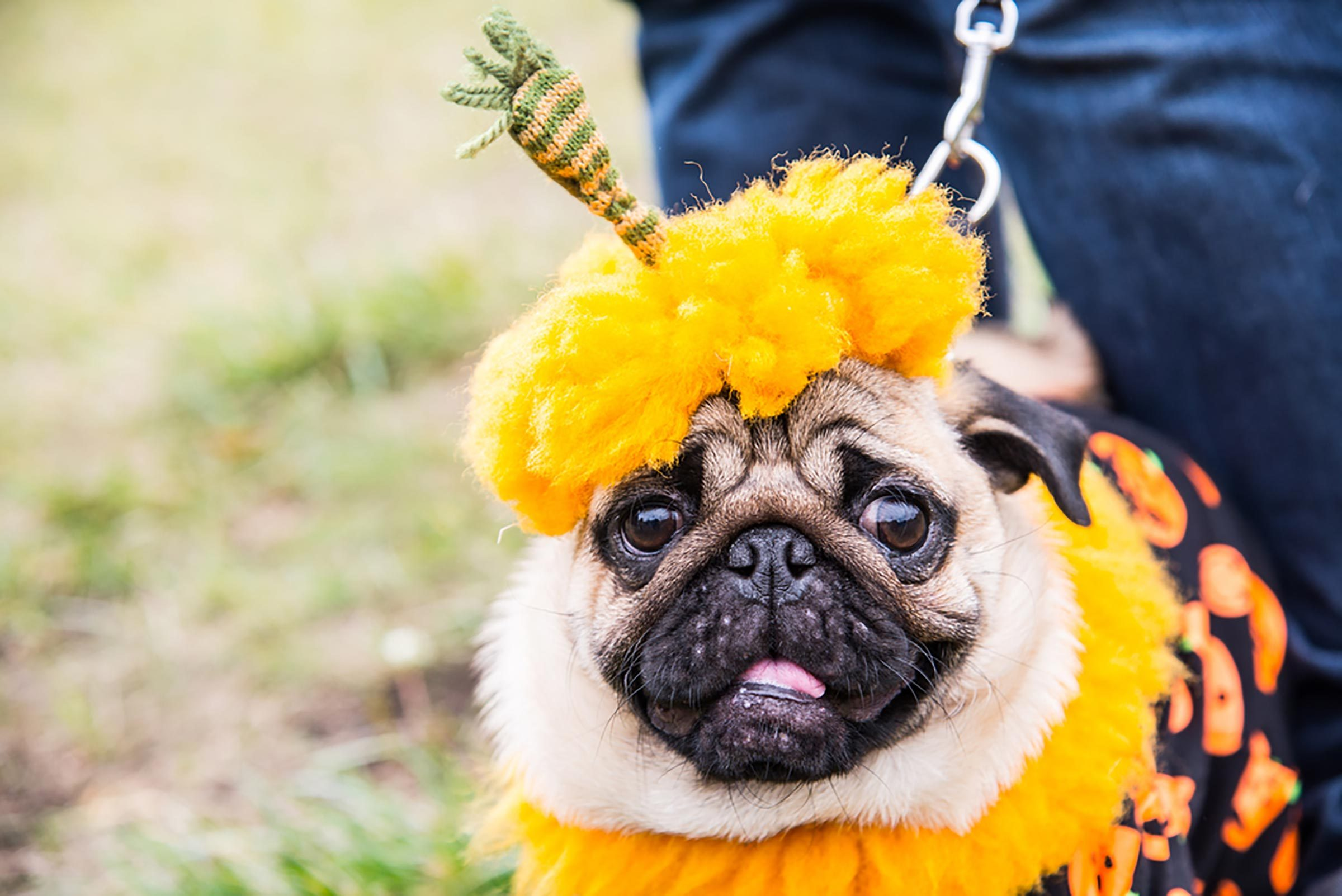 halloween costumes for dogs read this before dressing your pooch