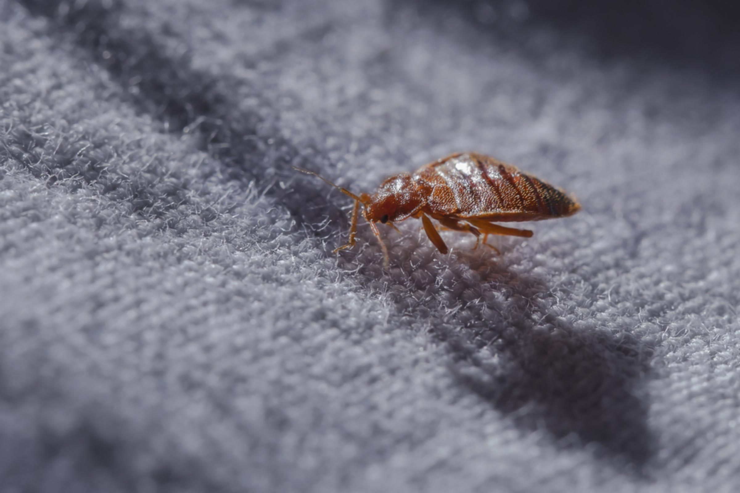 How to Spot Bed Bugs in Your Airplane Seat