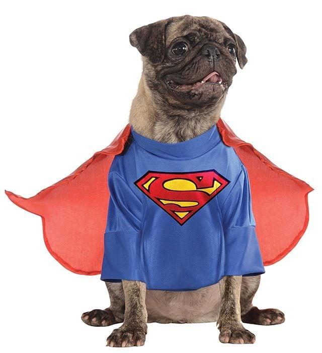 superman  sc 1 st  Readeru0027s Digest & Dog Halloween Costumes: Best Halloween Costumes for Dogs | Readeru0027s ...