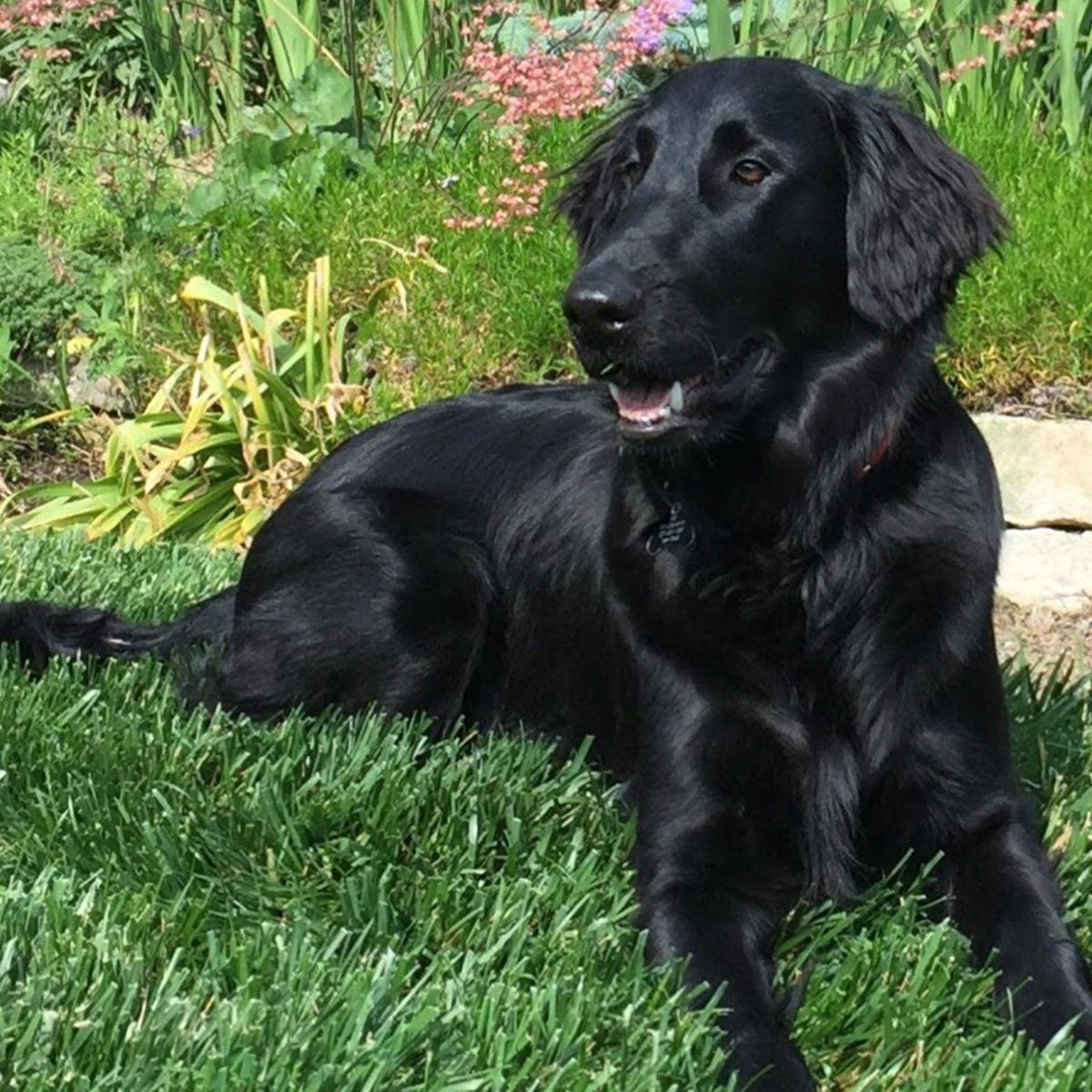 Rescue Dogs and Their Beautiful Adoption Stories | Reader's