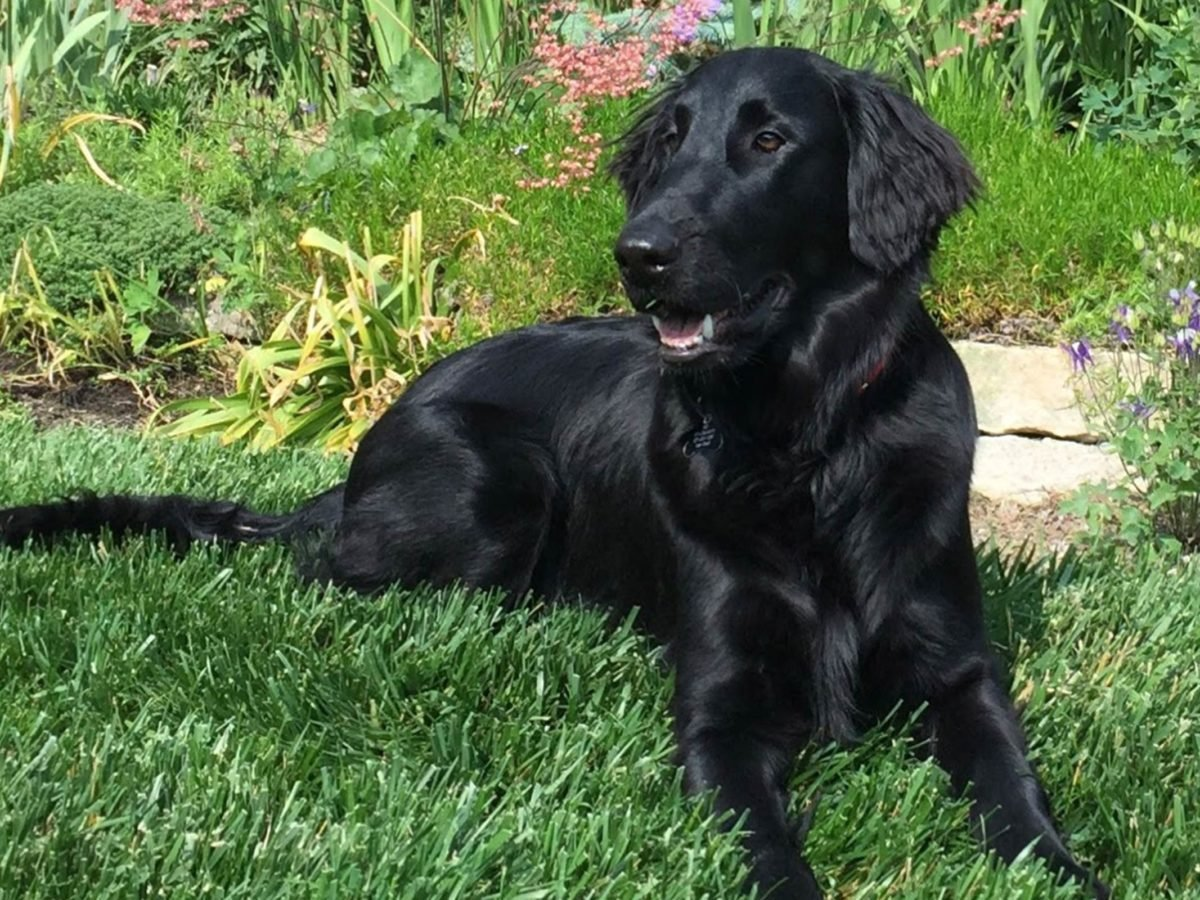 Rescue Dogs And Their Beautiful Adoption Stories Readers Digest