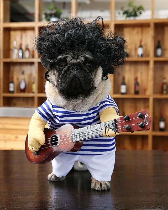 Via Petthingsonline Your Pooch Will Make People Do A Double Take And Then Probably Laugh With This Awesome Costume From Pet Things Online
