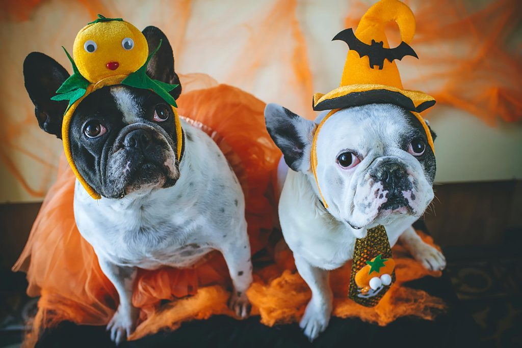 Halloween Costumes for Dogs: Read This Before Dressing Your Pooch ...