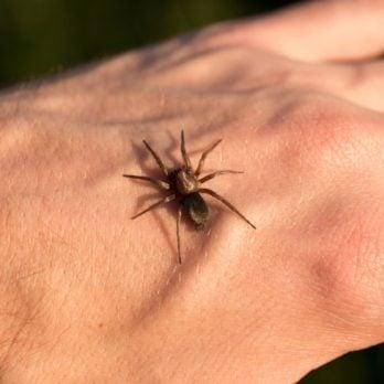 7 Bug Bites You Should Never, Ever Ignore