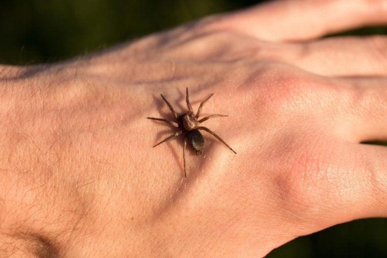 Bug Bite Symptoms You Should Never Ignore Reader 39 S Digest