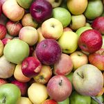 The Right Way to Pick an Apple—and 8 Other Things to Know Before You Go Apple Picking