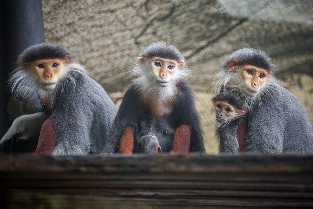 Permintaan ini bukanlah bercandaan, karena monyet itu tampaknya akan digunakan untuk memfilmkan iklan.