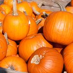 The Fall Food Festivals in America You Have to Try This Season