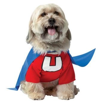 18 of the Best Halloween Costumes for Dogs