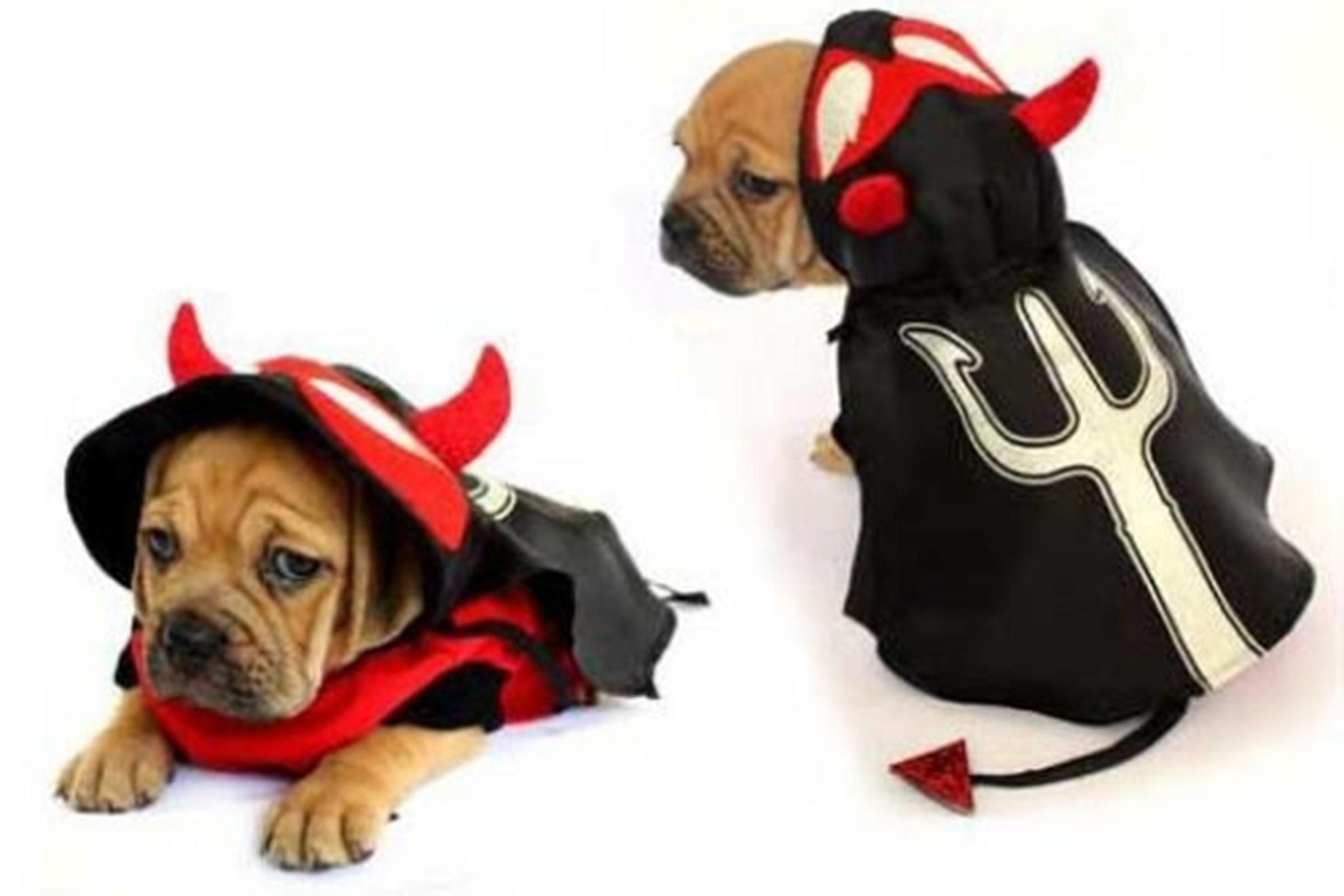 dog halloween costumes: best halloween costumes for dogs | reader's