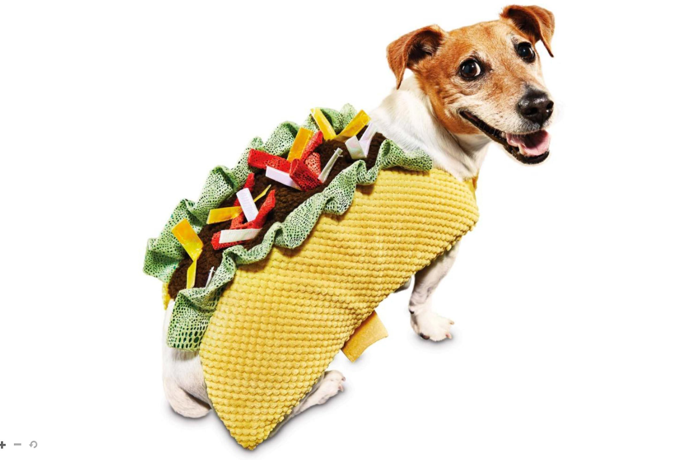 dog halloween costumes: best halloween costumes for dogs   reader's