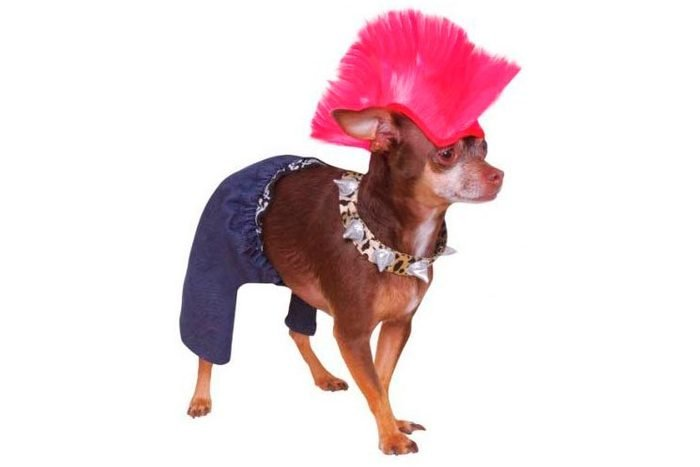 dog costume mohawk