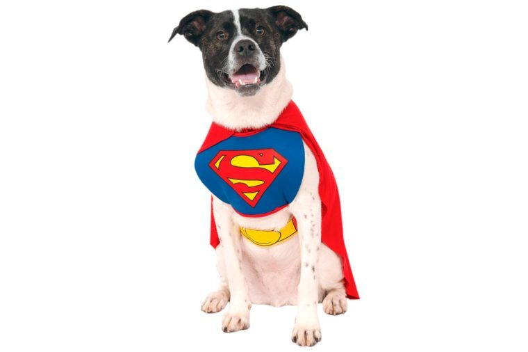 dog costume superman