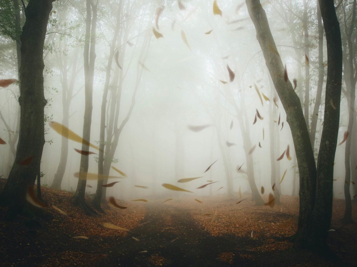 The Science Behind Why Howling Wind Is Spooky | Reader's Digest