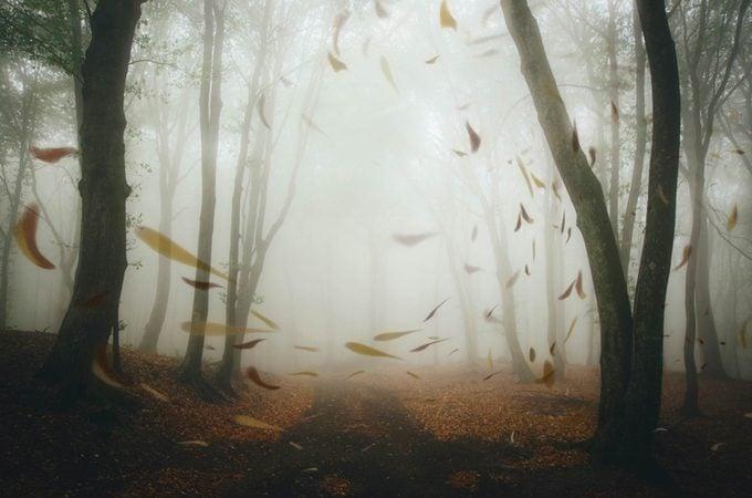 spooky-wind