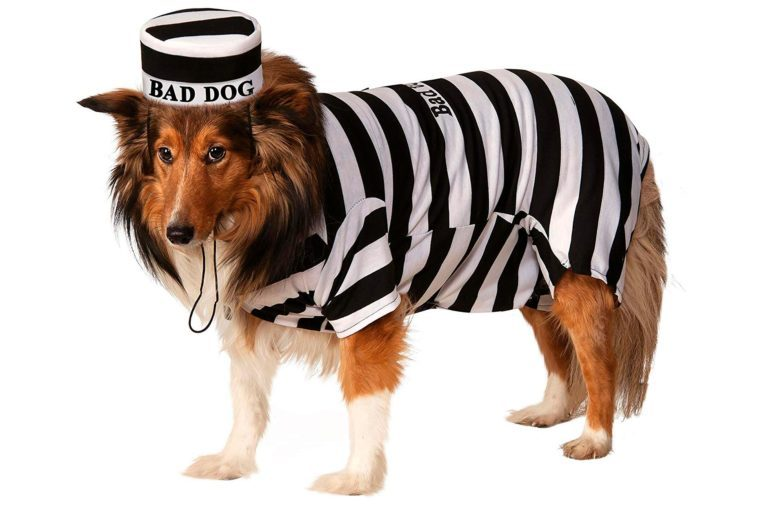 dog costume bad jail uniform