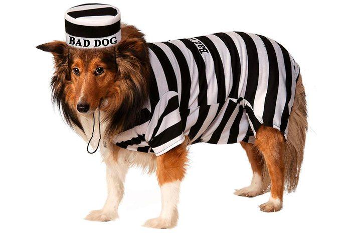 dog costume bad jail uniform