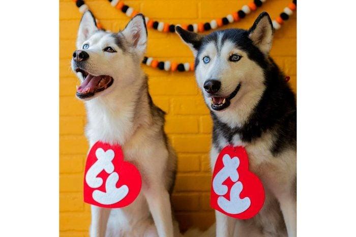 dog costume beanie baby tag