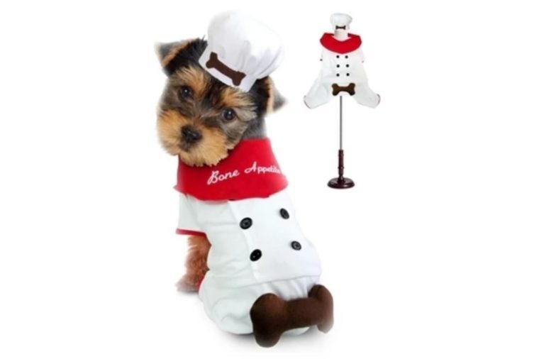 dog costume chef