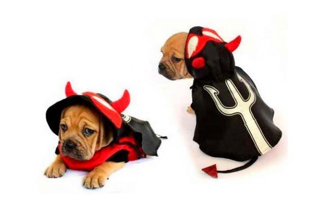 dog costume devil