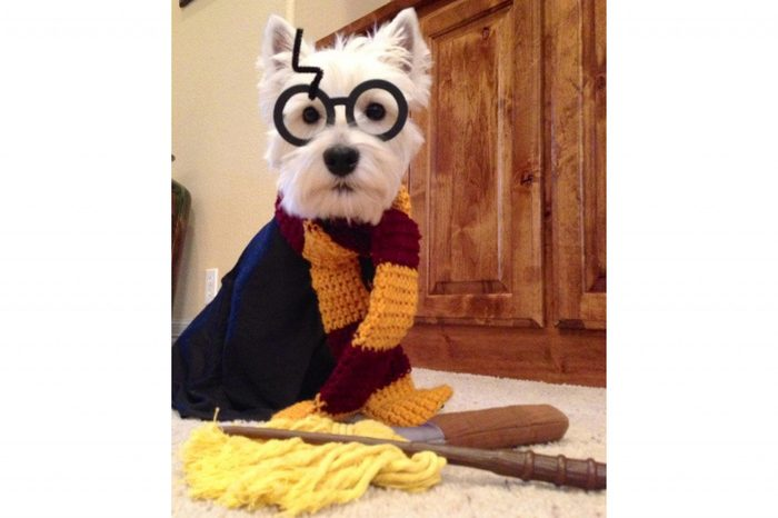 dog costume harry potter