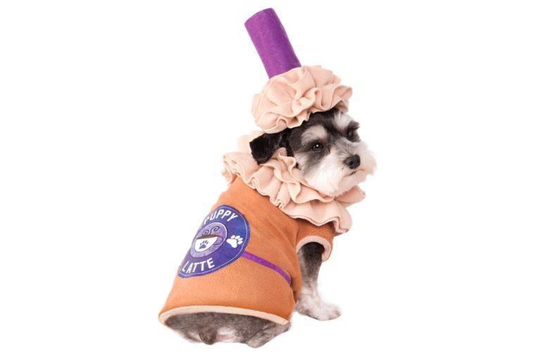 dog costume latte