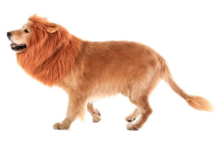 dog costume lion