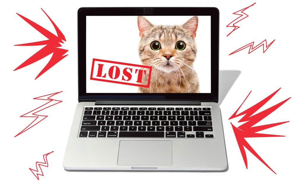 The Internet Is Reuniting Missing Pets and Their Owners—All It Takes Is One Post