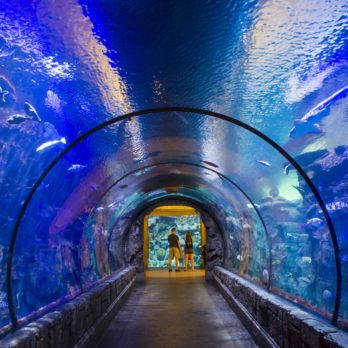 13 Things to Do in Las Vegas That Don't Involve Casinos