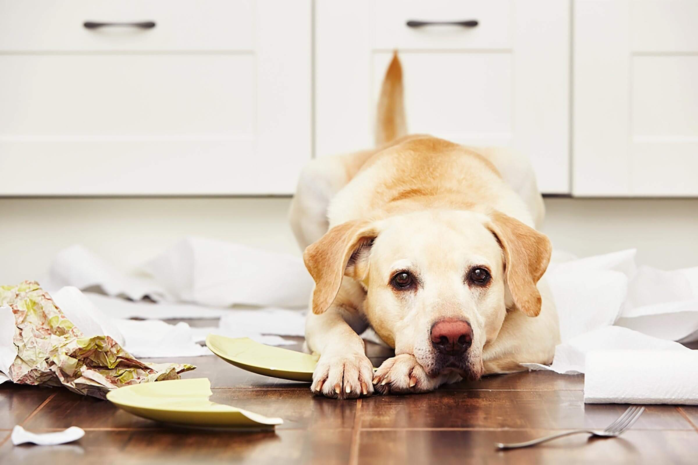 dog sitting among broken dishes on the floor