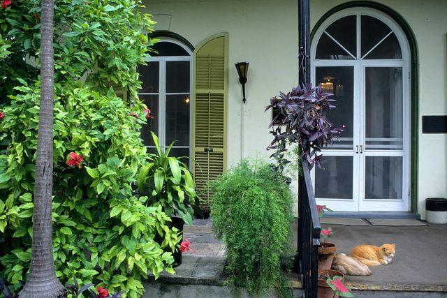 cat porch