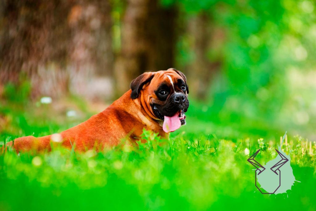 The Dog Breed That's Most Compatible with Your Zodiac Sign