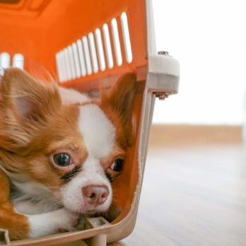 9 Unexpected Things That Trigger Dog Anxiety