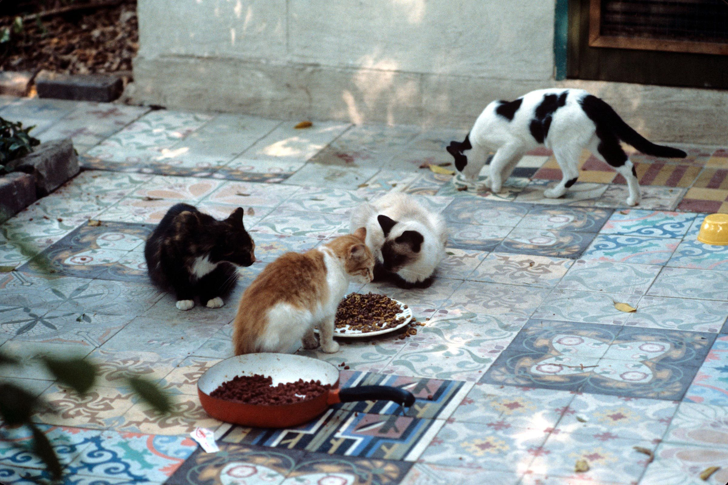 Meet The Six Toed Cats Living In Ernest Hemingway S Old House