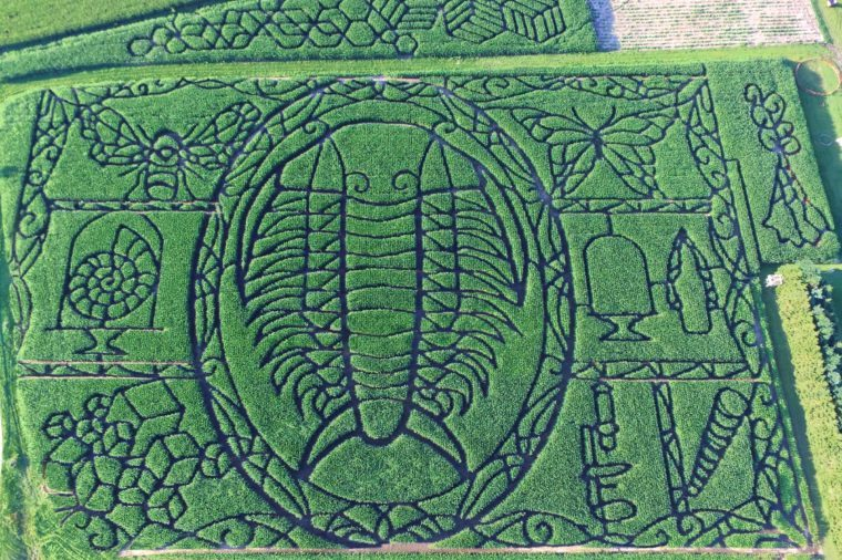 03-tk-most-insane-corn-mazes-in-america-Courtesy-Treinen-Farms