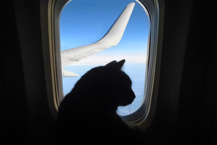 cat on airplane cutest animals of 2019