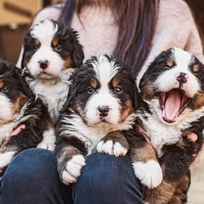 dogist-puppies