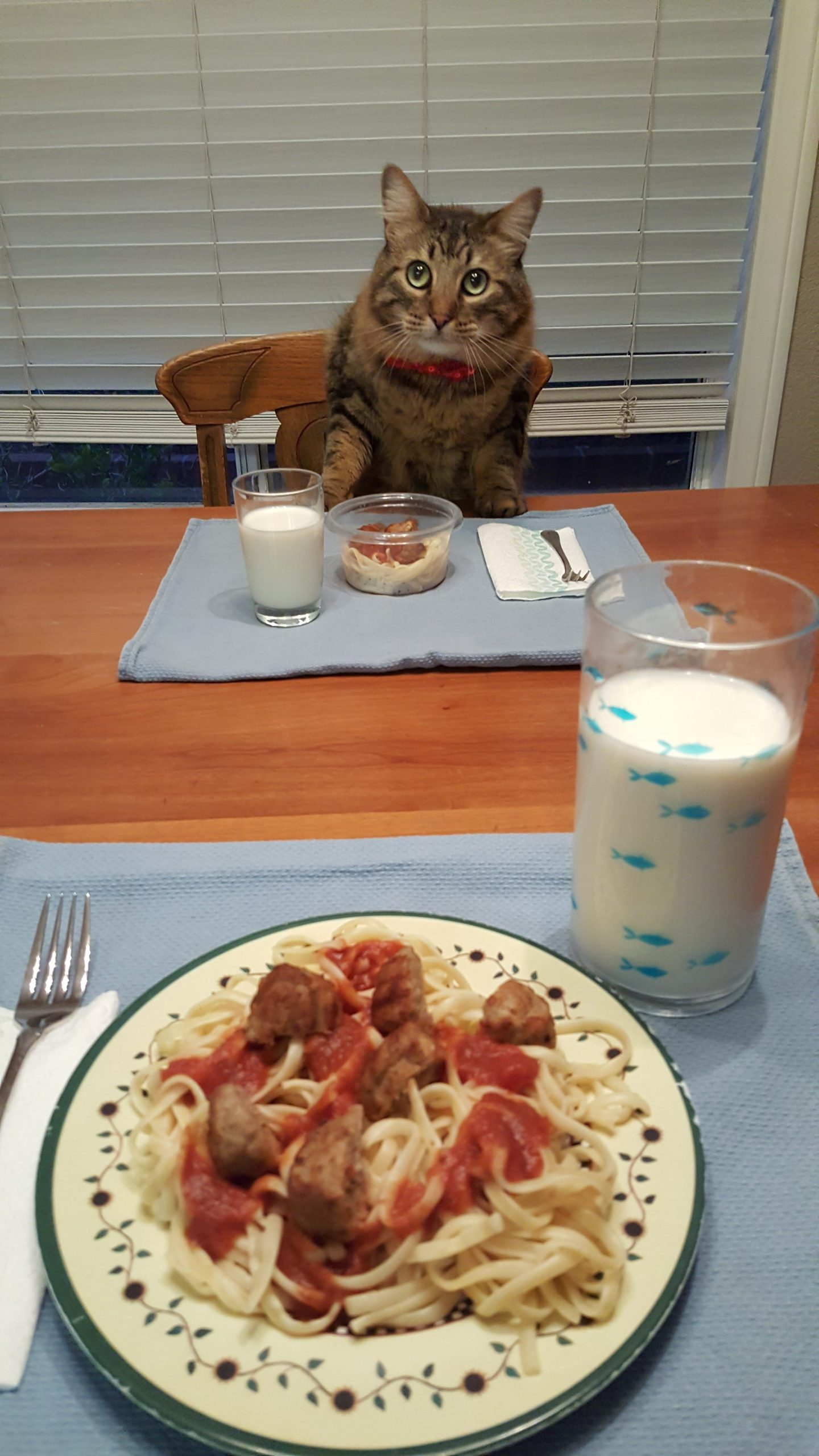 Cat sitting at dinner table with spaghetti and meatballs and a glass of milk