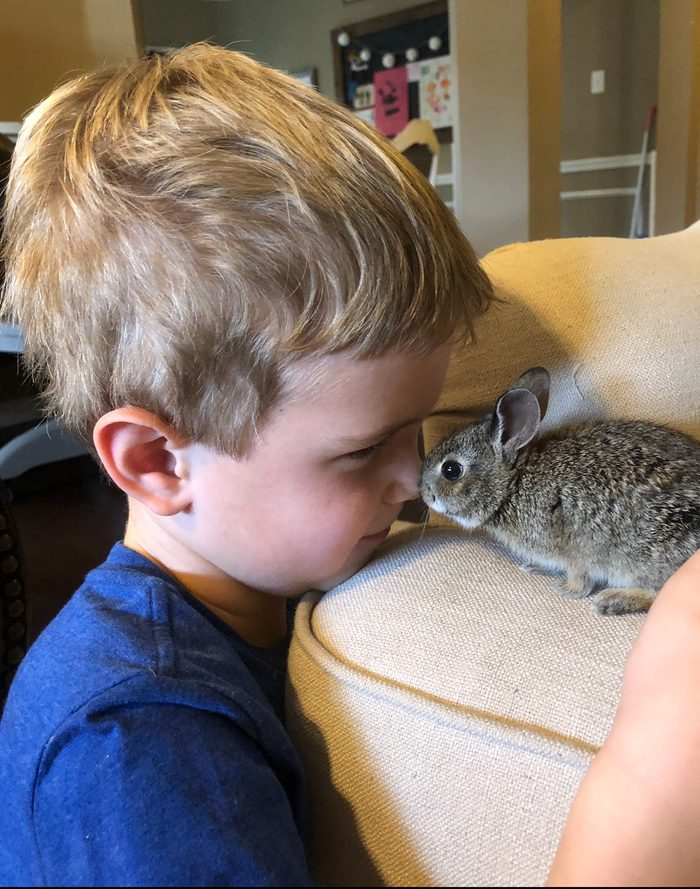 Cottontail rabbit with little boy