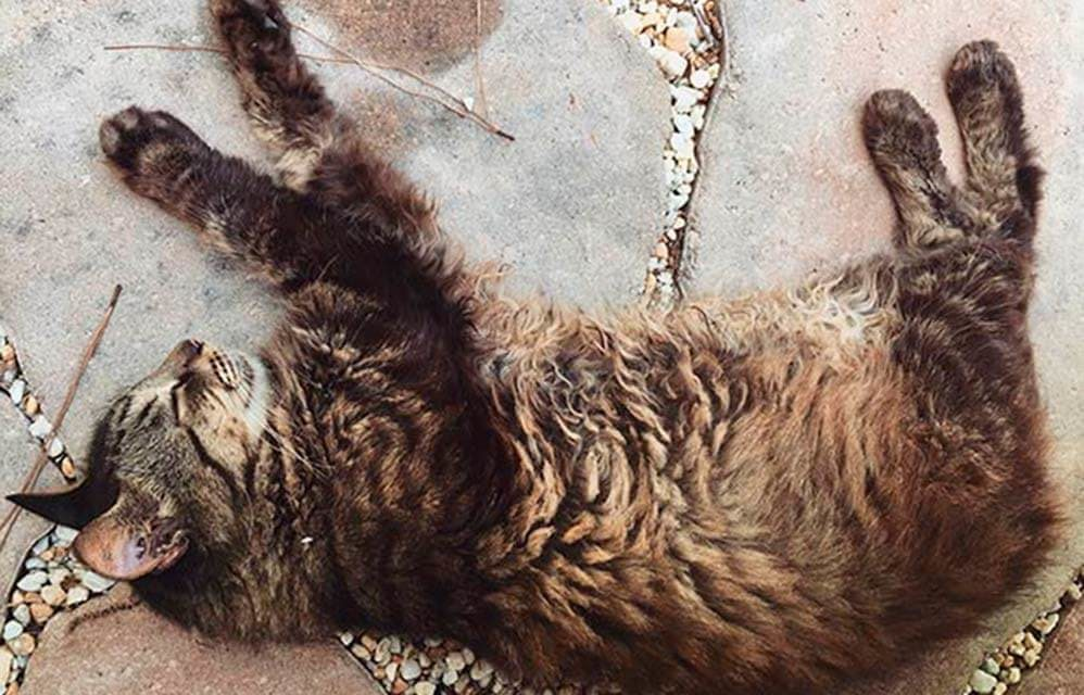 cat napping on paving stones