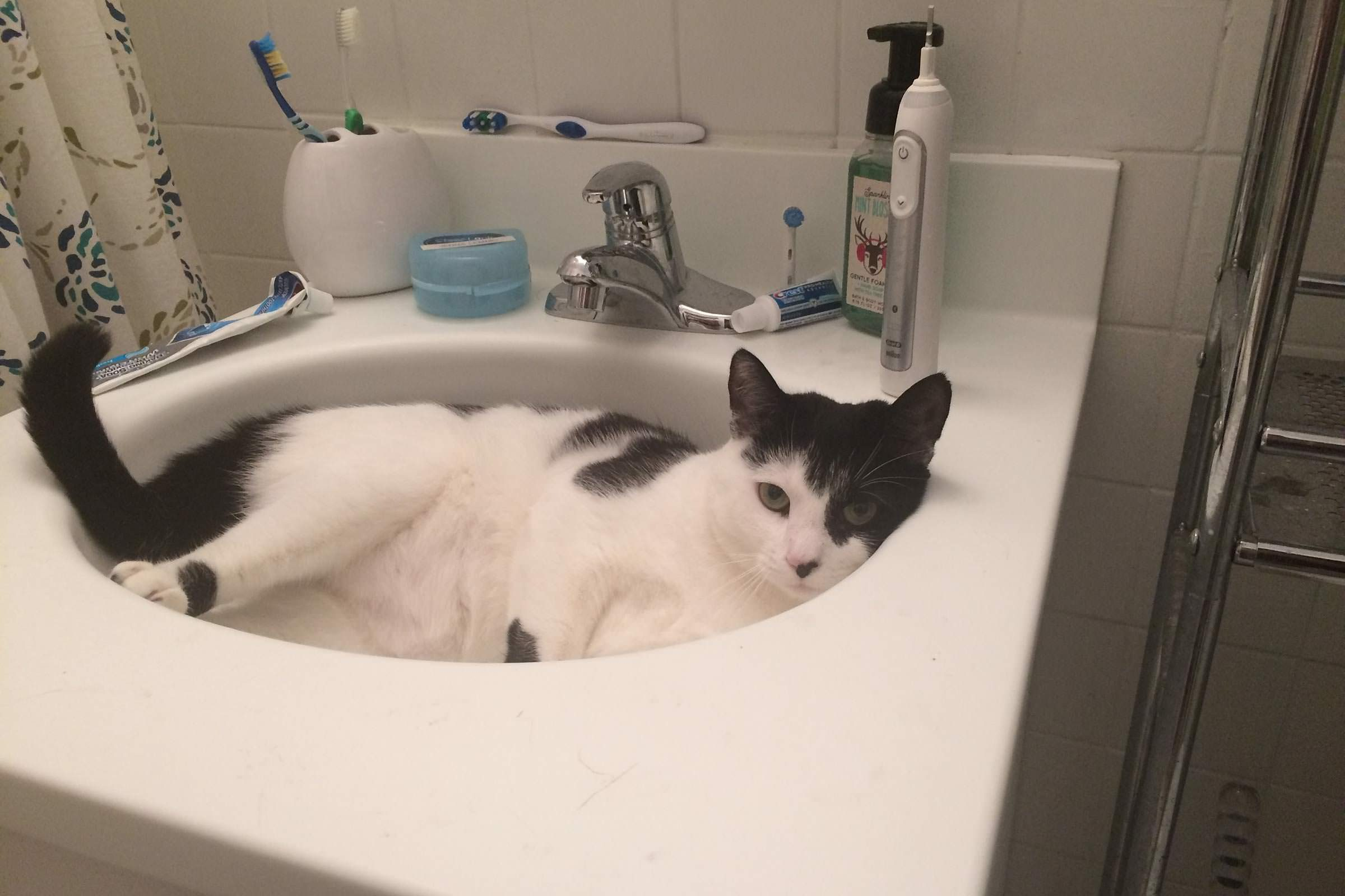 cat curled up in a bathroom sink