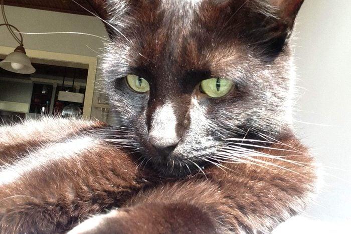 close up of black cat in the sun