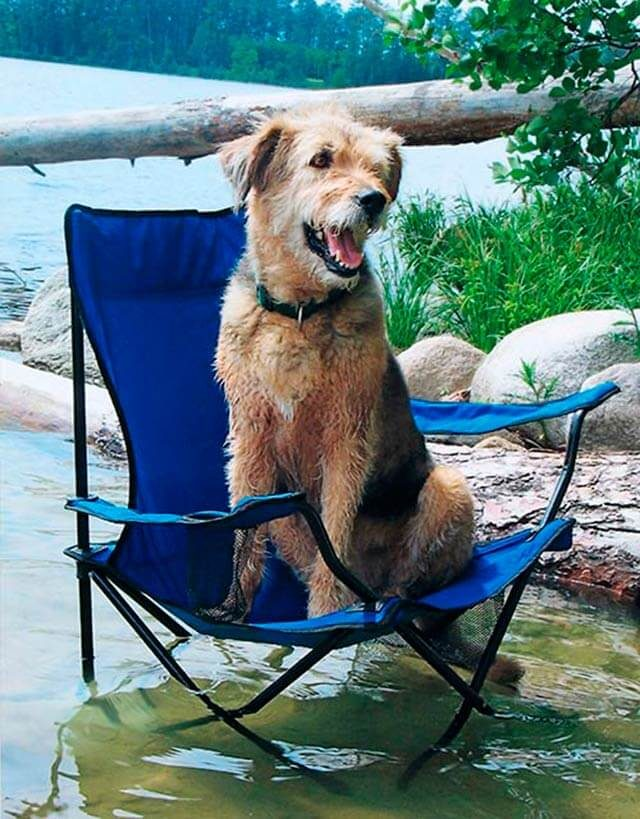 dog sitting in a folding camp chair in the lake